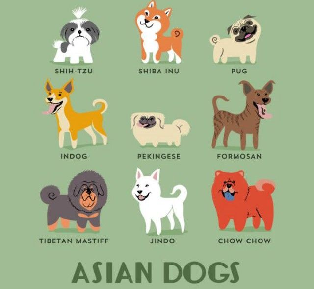 What Nationality Is Your Dog? (15 pics)