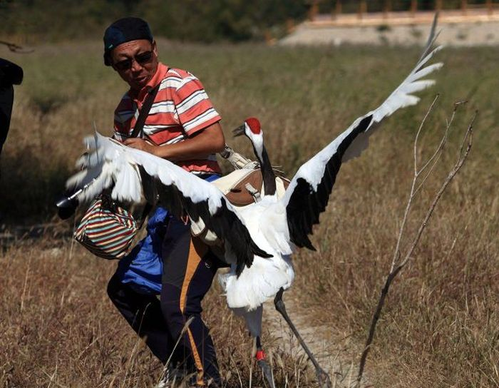 Photographer Gets Into A Fight With A Crane (10 pics)