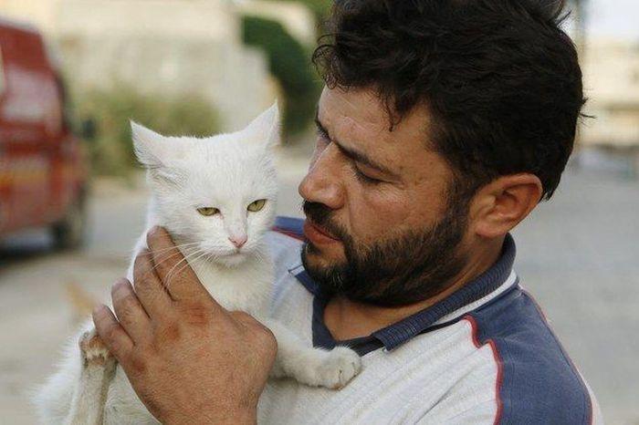 Syrian City Has Hundreds Of Stray Cats (8 pics)
