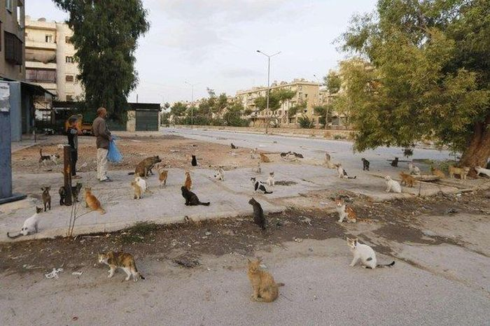 Syrian City Has Hundreds Of Stray Cats (8 pics)