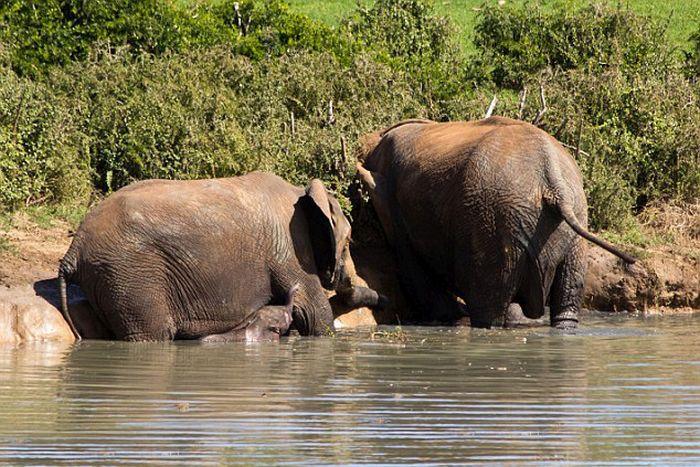 Brave Rangers Rescue A Baby Elephant (10 pics)