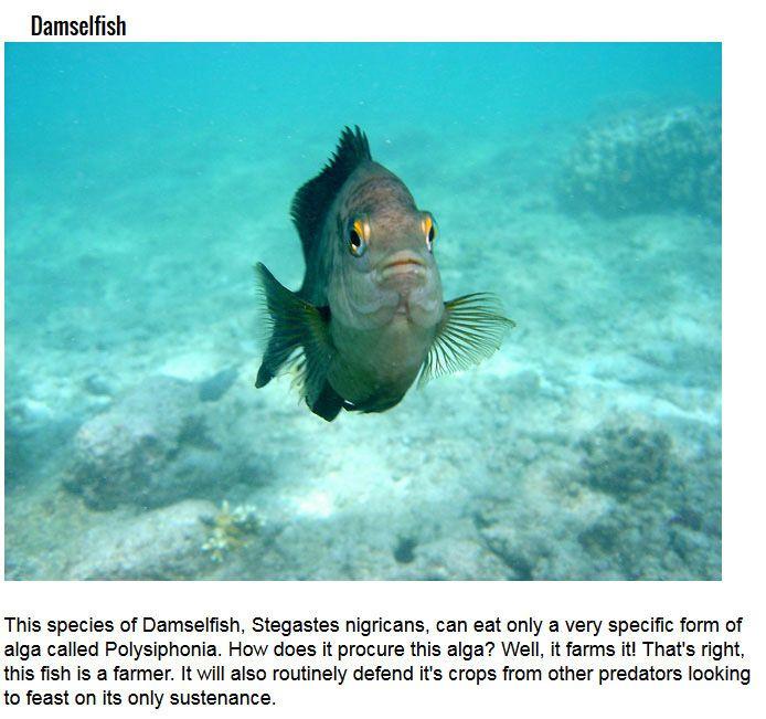 Secret Talents You Didn't Know Fish Had (10 pics)