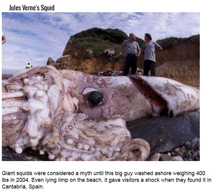 These Sea Creatures Will Make You Want To Stay Away From Water (14 pics)