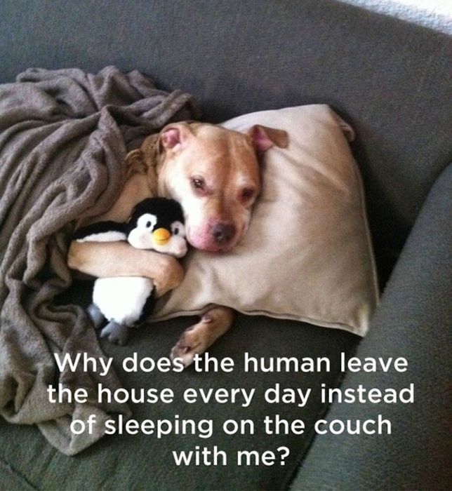 What Really Goes On Inside The Mind Of A Dog (11 pics)