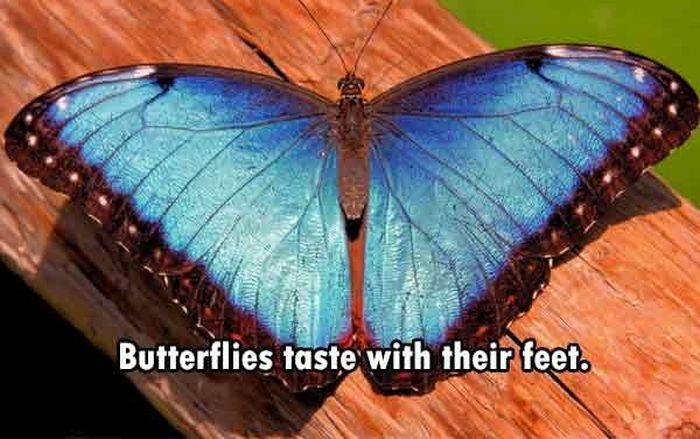 These Are The Funnest Facts You Will Learn Today (24 pics)