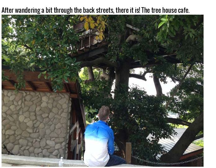 This Tree House Cafe Is The Perfect Spot To Relax (27 pics)