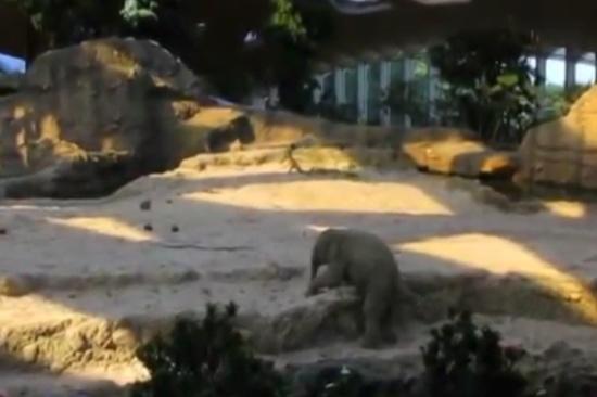 Adult Elephants Help Their Cub