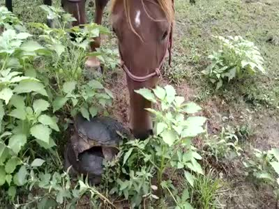 Horse Gets Scared By Turtles