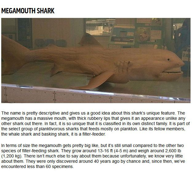 10 Strange Sharks You Didn't Know Were In The Ocean (10 pics)