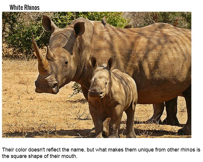 These Animals Have Very Misleading Names (18 pics)
