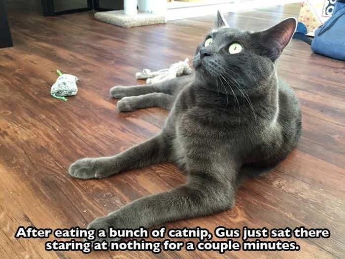 These Cats Are Completely Wasted Off Of Catnip (21 pics)