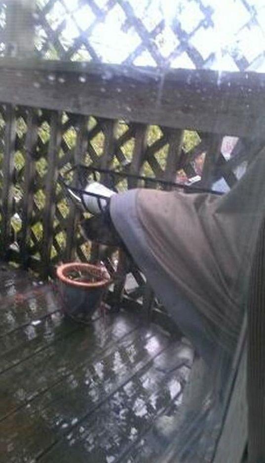 Dog Makes A Raincoat (3 pics)