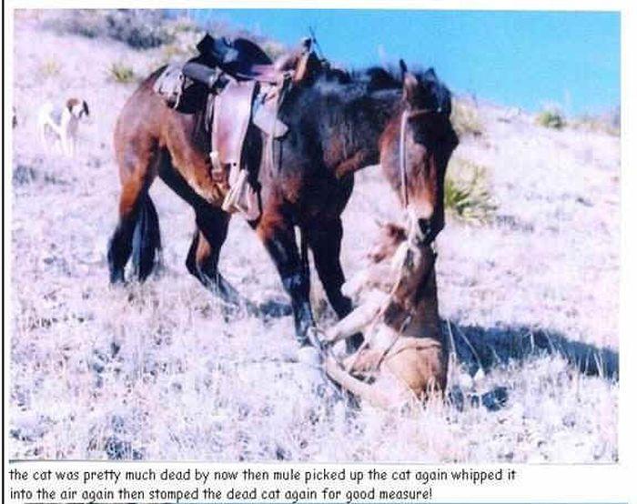 Oldie της ημέρας.  Ένα μουλάρι Καταστρέφει Απολύτως Μια Puma (4 pics)