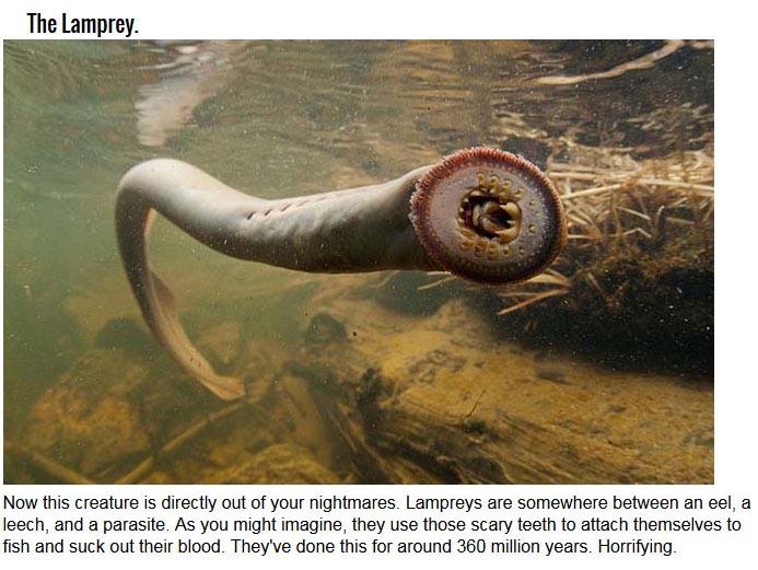 12 Εξαιρετικά Παλιά Και τρομακτικό Ζώα (12 pics)