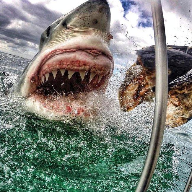 Shark Gets A Closeup (7 pics)