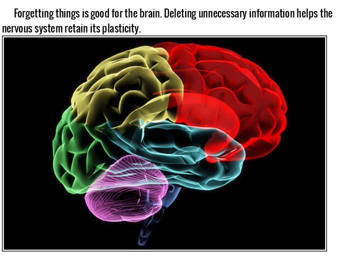 Things You Didn't Know Effect Your Brain In A Big Way (15 pics)