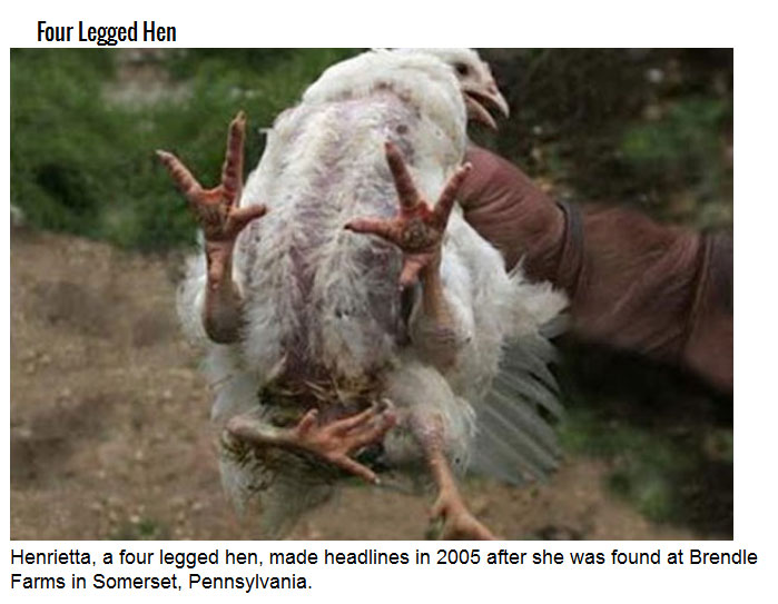 Freaks Of Nature You Didn't Know Existed (21 pics)