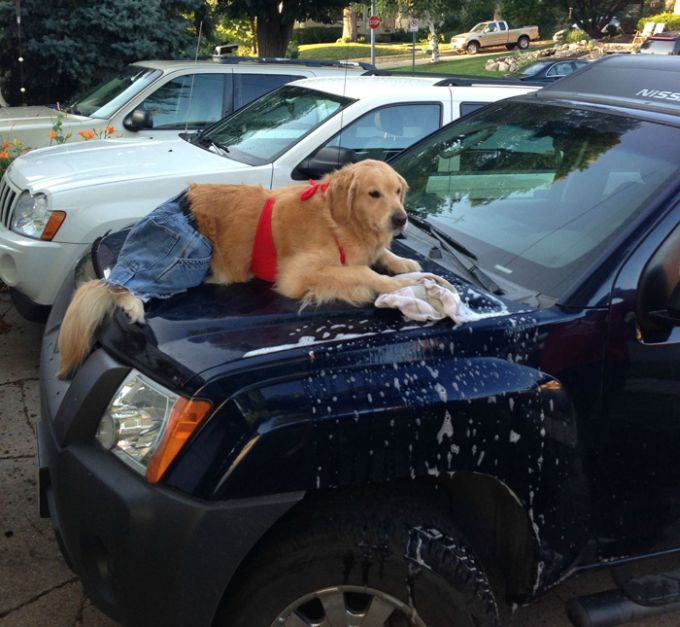 Meet Bailey The Dog That Does Everything (17 pics)