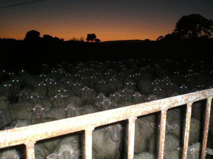 Photos That Are Terrifying Because They Are Real (15 pics)