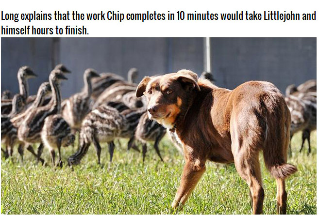 Chip the Dog from Australia (10 pics)