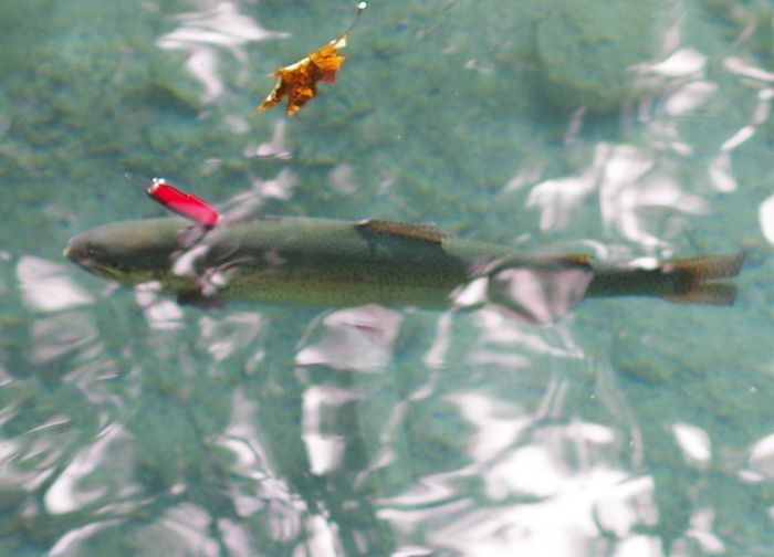Is This A Trout Or A Swiss Army Knife? (5 pics)