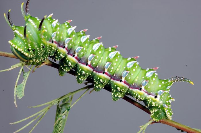 Before And After Photos Of Caterpillars Becoming Butterflies (38 pics)