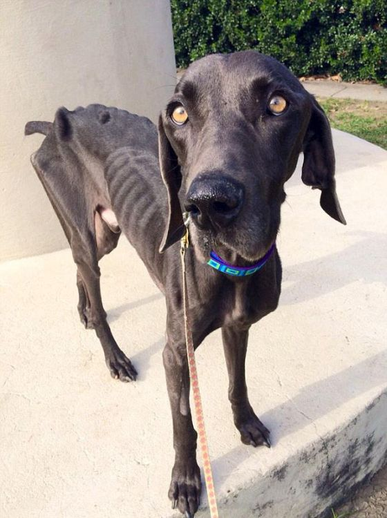 This Dog Came Back From The Brink Of Death (11 pics)