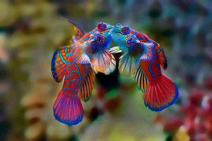 You Won't Believe These Animals Aren't Photoshopped (51 pics)