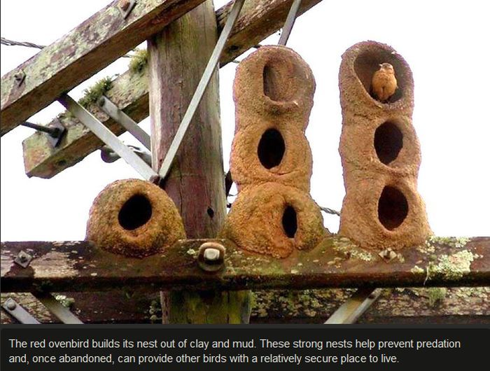 Proof That Animals Make Great Architects (27 pics)