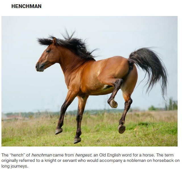 Words That Originated With Animals (16 pics)
