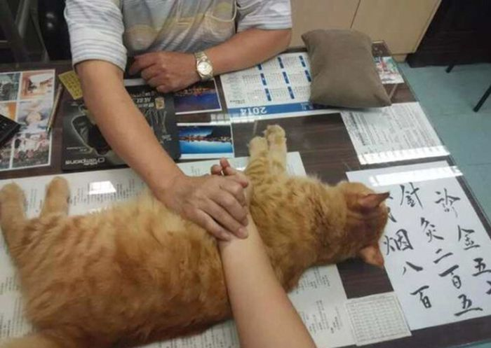 Chinese Clinic Has A Special Helper To Calm People Down (4 pics)