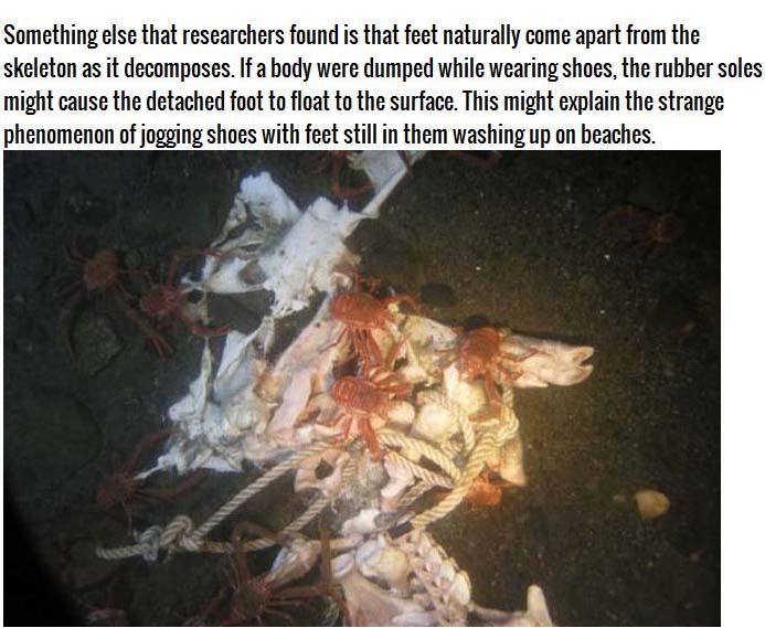 This Is What Happens To A Body When You Dump It In The Water (4 pics)