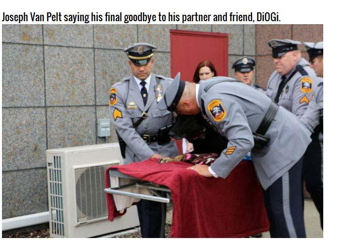 Saying Goodbye To DiOGi The German Shepherd (8 pics)