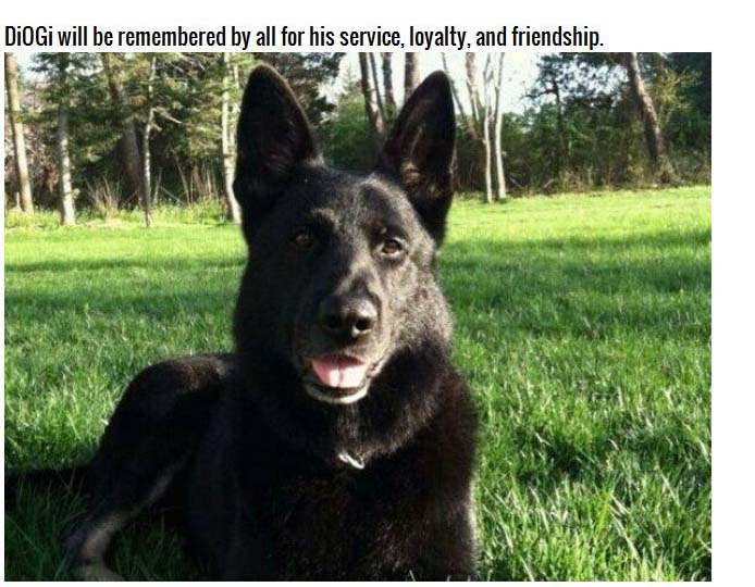 Saying Goodbye To DiOGi The German Shepherd (8 pics)