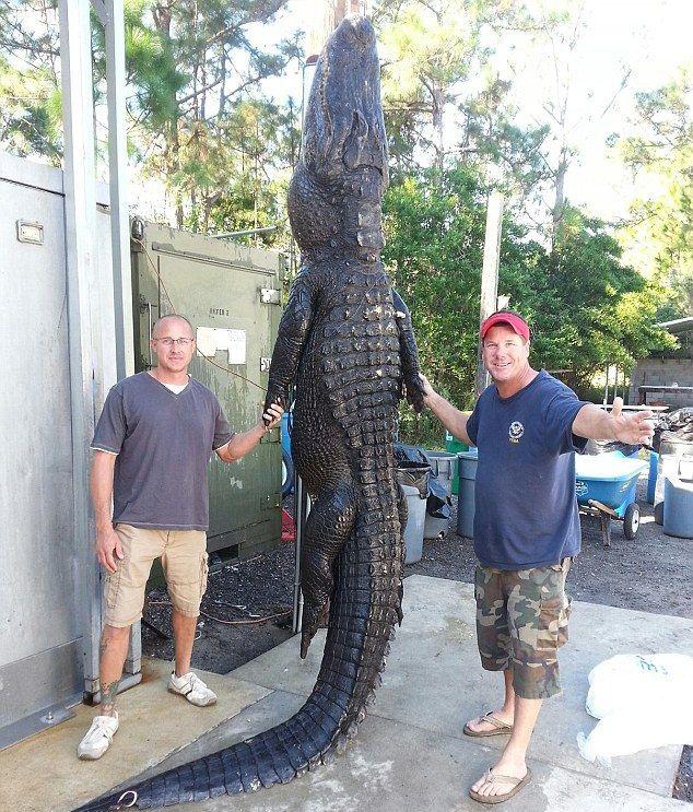Crocodile Hunters Went Alligator Fishing (5 pics)