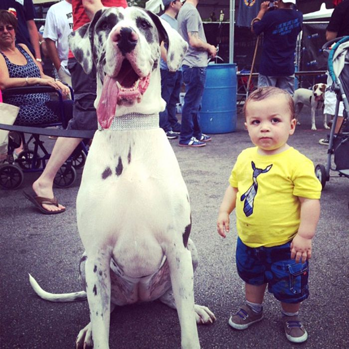 Big Dogs and Little Kids (46 pics)
