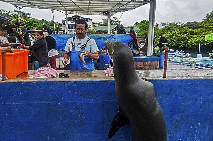 Sea Lion Waiting for a Snack (7 pics)