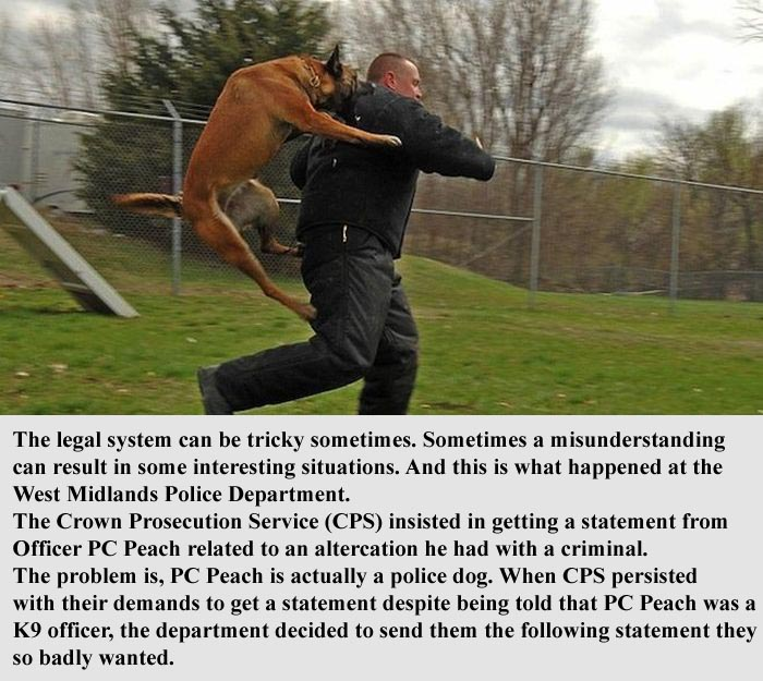 Police Dog Gives A Hilarious Statement To Prosecutors (2 pics)