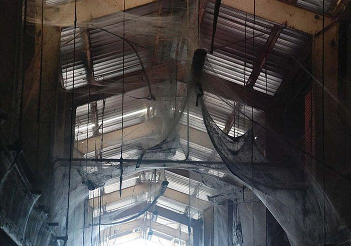 This Gigantic Spider Web Is The Thing Nightmares Are Made Of (6 pics)