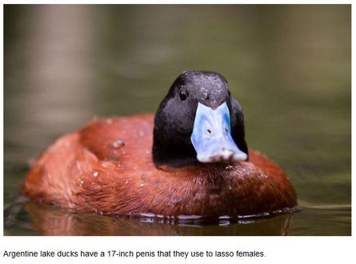 The Truth About Animals And Their Sexual Habits (27 pics)