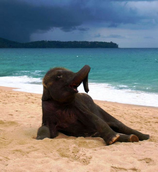 This Baby Elephant On The Beach Will Make Your Day (4 pics)