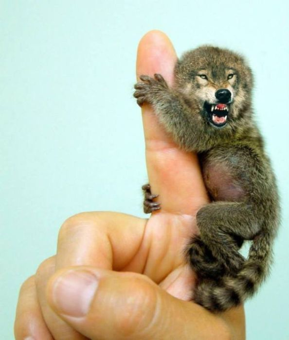 Hybrid Animals You Wish Really Existed (21 pics)