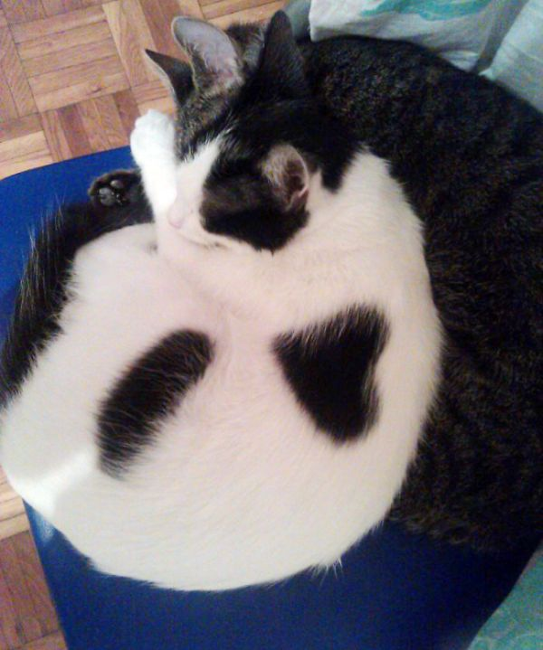 Animals That Have Interesting Marks On Their Fur (40 pics)