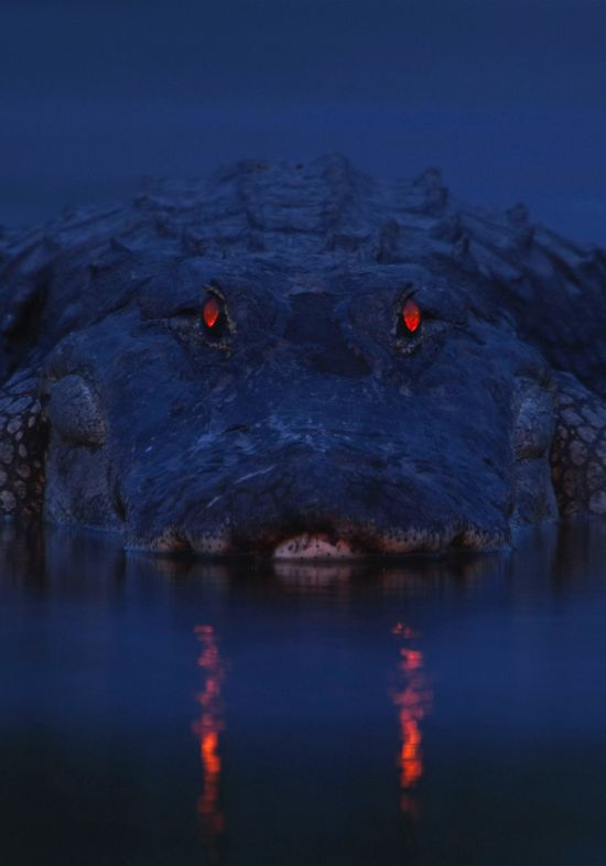 You Don't Want To Run Into These Animals At Night (5 pics)
