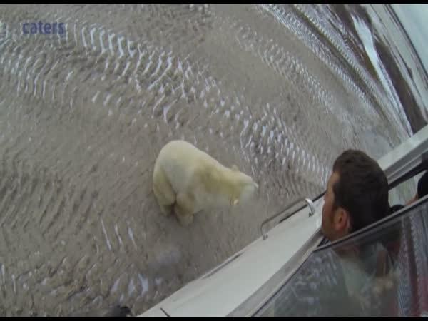 Polar Bear Gives Tourists Incredible Greeting