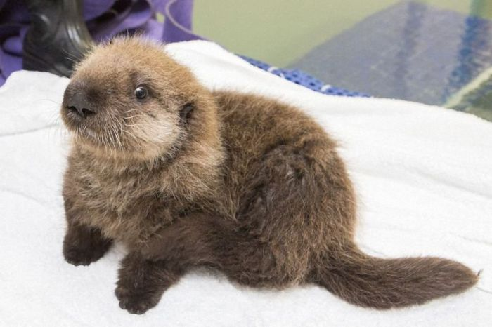 Time For The Otter To Learn How To Swim (21 pics)
