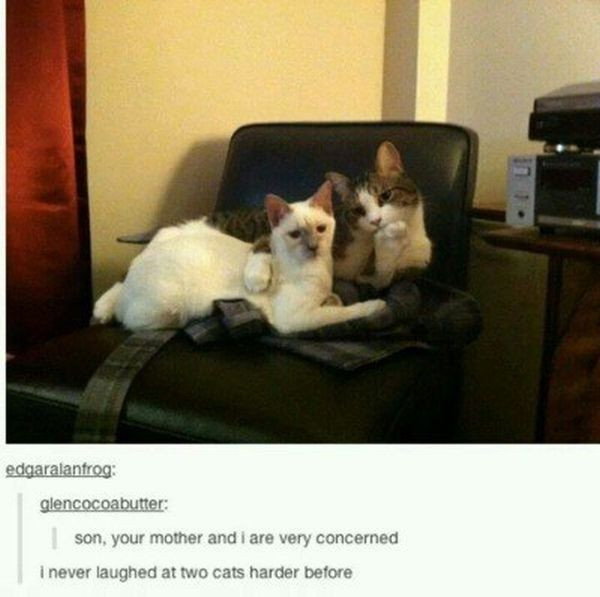 Times That Tumblr Captured The Best Cat Moments (21 pics)