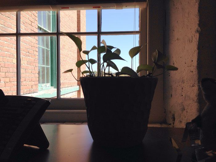 This Is How You Babysit A Plant The Right Way (22 pics)