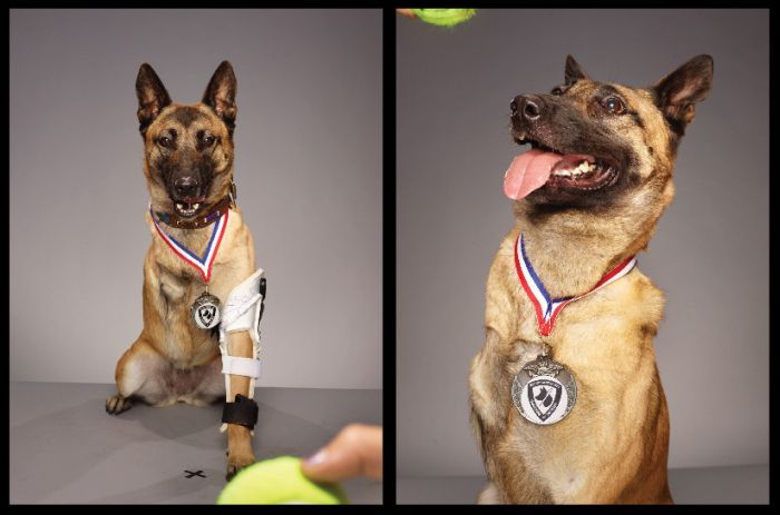 This Three Legged Dog Is A Veteran (14 pics)