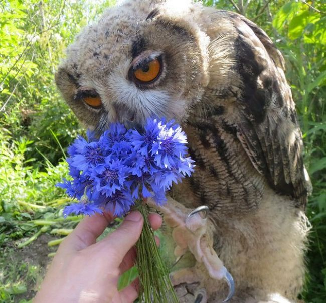 This Owl Does Not Like Having His Photo Taken (3 pics)